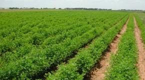 Producción Agrícola
