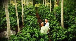 """Honduras será sede de reality show del café """"Barista & Farmer"""""""