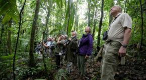 Avituristas impresionados por naturaleza, aves y hondureñosAvituristas impresionados por naturaleza, aves y hondureñosAvituristas impresionados por naturaleza, aves y hondureñosAvituristas impresionados por naturaleza, aves y hondureños