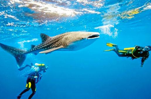 La ONU declara a la isla de Utila como el mejor lugar del mundo para bucear